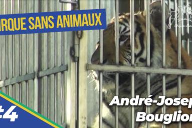 La captivité dans les cirques : André-Joseph Bouglione livre son point de vue à la FBB (4/9)