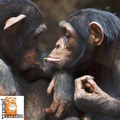 FBB Projet Primates France