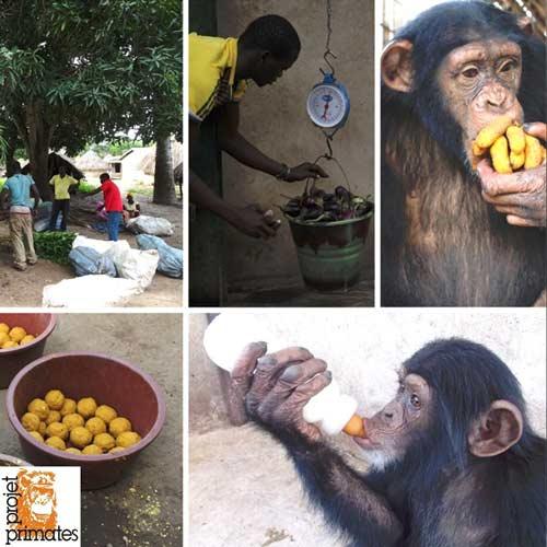 FBB Projet Primate Guinée