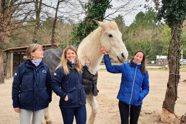 La FBB prend en charge un cheval sauvé des inondations de 2019 à Fréjus
