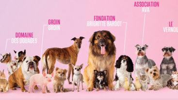 Saint-Valentin des animaux  : Vepee organise une collecte digitale au profit des refuges !