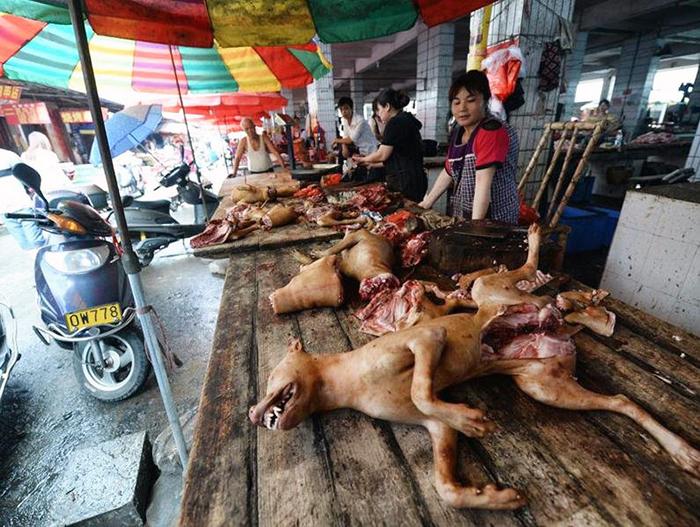 fondation brigitte bardot festival viande chien yulin chine