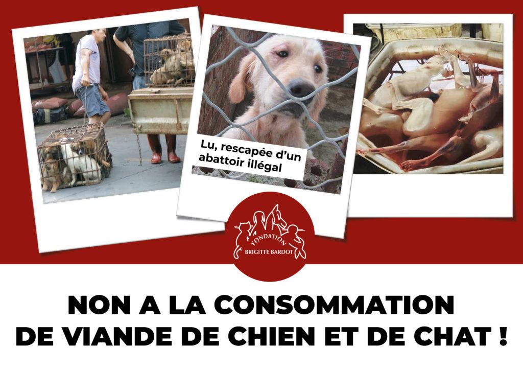 Consommation viande chien chien