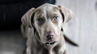 Confinement : quelle attitude avoir avec son chien ?