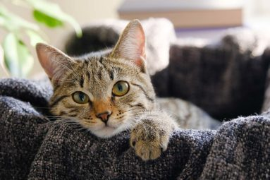 Stop abandon : les animaux domestiques ne transmettent pas le coronavirus !