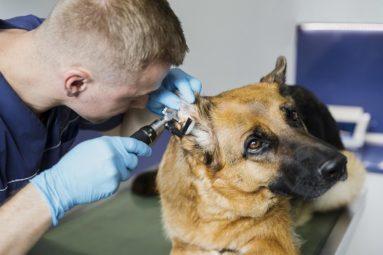 Comment consulter son vétérinaire en période de confinement ?