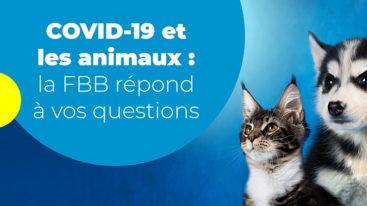 La Fondation Brigitte Bardot répond à toutes vos questions sur vos animaux pendant le confinement