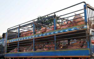 fondation brigitte bardot covid-19 confinement europe transport animaux élevage ONG Europe