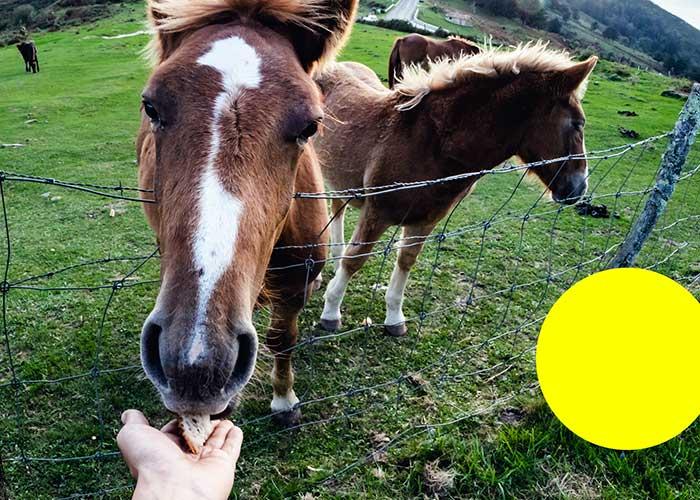 fondation brigitte bardot confinement coronavirus questions reponses animaux de rente