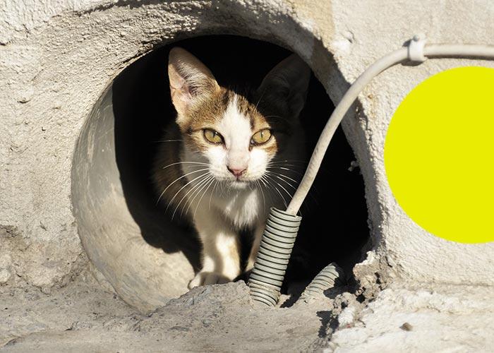 fondation brigitte bardot confinement coronavirus questions reponses animaux domestiques