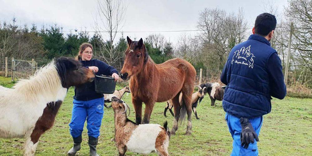 La FBB en sauvetage d'équidés, caprins et chats dans le Morbihan