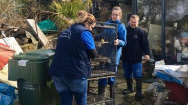 Leur propriétaire a été hospitalisée : la FBB prend en charge des animaux en manque de soins sur un site insalubre de Seine-et-Marne