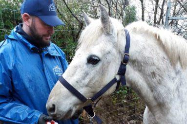 La FBB au secours d'équidés et d'animaux de ferme dans la Manche