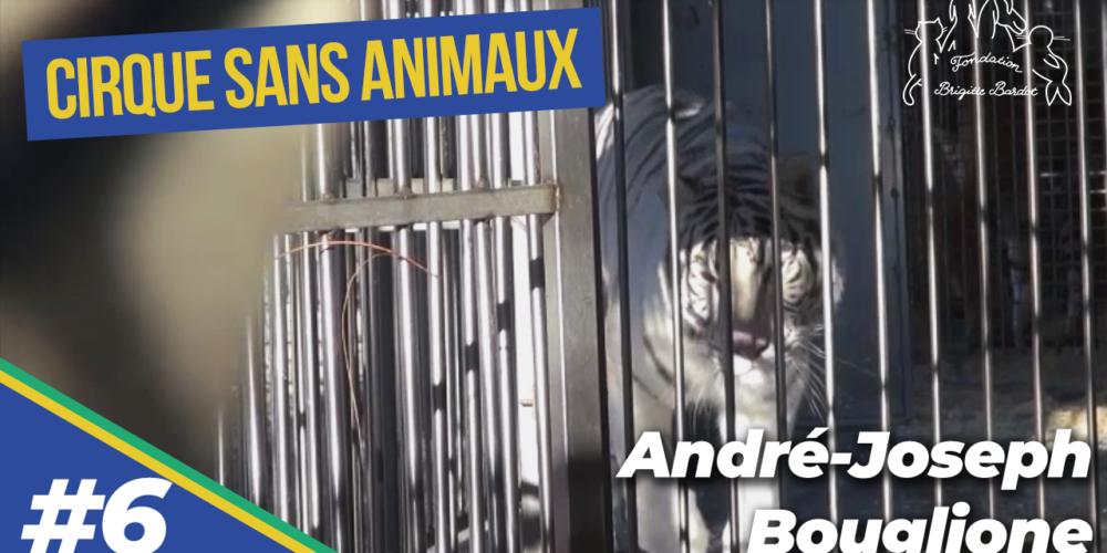 Le dégriffage dans les cirques : André-Joseph Bouglione nous en dit plus sur cette maltraitance (6/9)