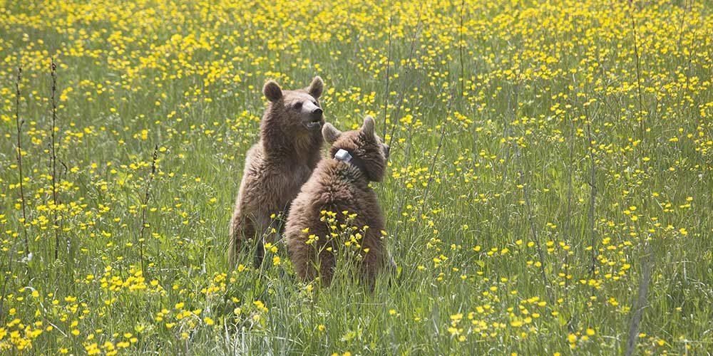 La FBB soutient la FPWC afin de préserver la faune sauvage en Arménie et dans le Caucase du sud
