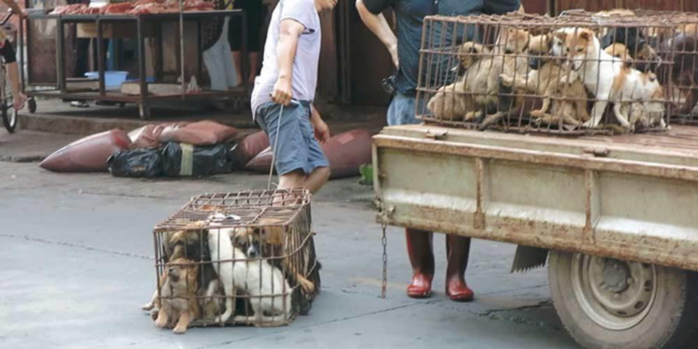 STOP à la consommation de viande de chien et de chat en Chine !
