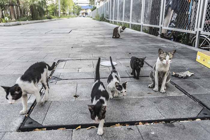 autorisation nourrissage chats errants libres confinement bénévoles