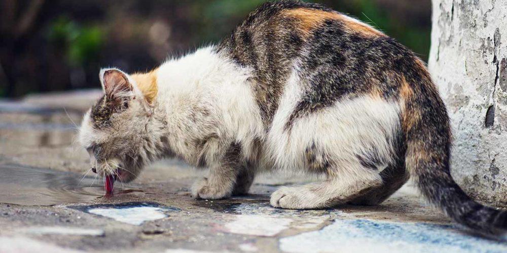 Confinement : le nourrissage des chats errants enfin autorisé par le ministère de l'Agriculture !