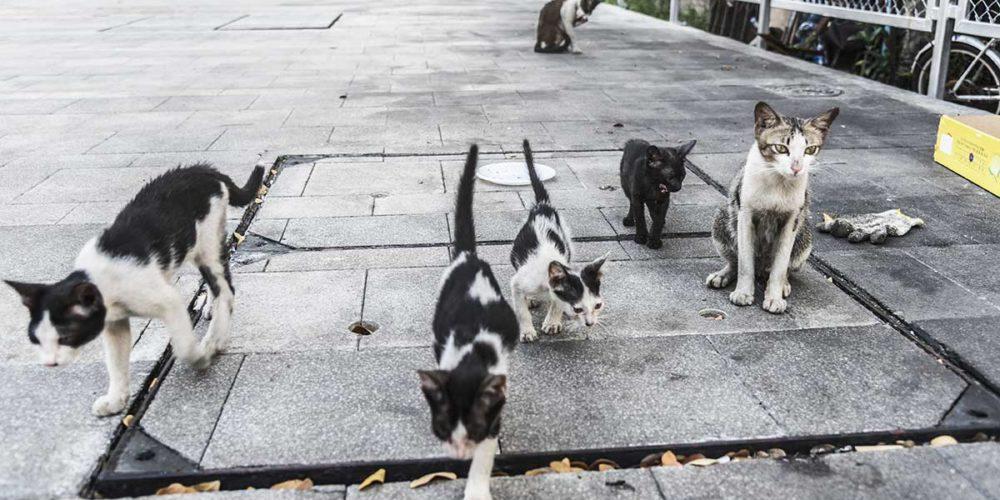 Confinement : Brigitte Bardot signe une lettre ouverte au ministre de l'Agriculture pour que les chats libres puissent être nourris