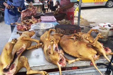Les chiens et les chats bientôt interdits de consommation en Chine ?