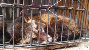 Lettre ouverte à l'OMS pour exiger l'interdiction définitive des marchés d'animaux sauvages