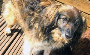 fondation brigitte bardot confinement adoption refuge derogation