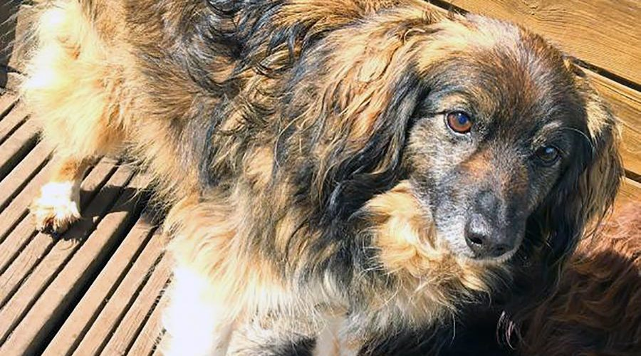Confinement : l'adoption d'un animal à nouveau possible en respectant les consignes sanitaires !