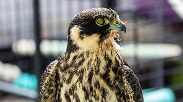 Urgence pour les centres de soins de la faune sauvage : la FBB demande au gouvernement de réagir !
