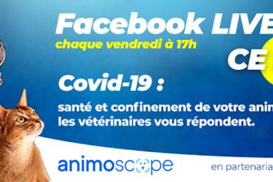 Ce soir, à 17h, ne manquez pas le Facebook Live d'Animoscope, en partenariat avec la FBB : un vétérinaire répondra à toutes vos questions sur vos animaux !