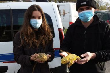 Pyrénées-Atlantiques : la FBB organise le sauvetage d'une dizaine de reptiles détenus dans des conditions terrifiantes