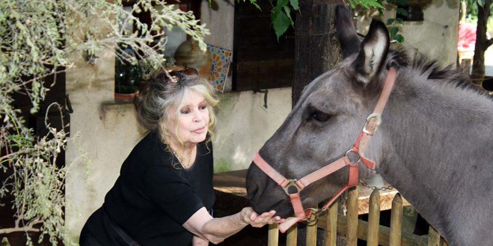 L'éditorial de Brigitte Bardot