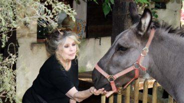 Brigitte Bardot s'exprime sur la tragédie du coronavirus : « Il faudra retrouver un peu d'humanité ! »
