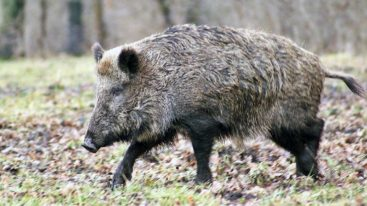 Alerte sur les destructions de la faune en période de confinement : la FBB signe la lettre ouverte de l'ASPAS à Emmanuel Macron