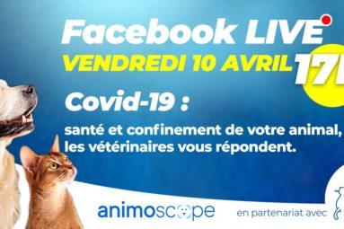 En partenariat avec la FBB, Animoscope vous propose un Facebook Live hebdomadaire où des vétérinaires répondent à vos questions !