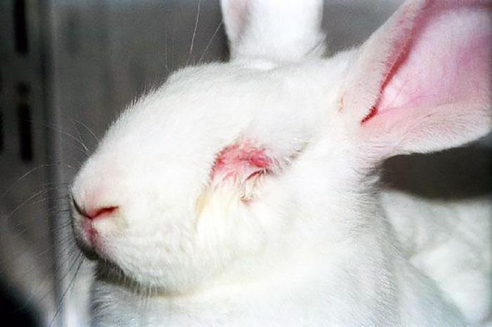fondation brigitte bardot combat expérimentation animale