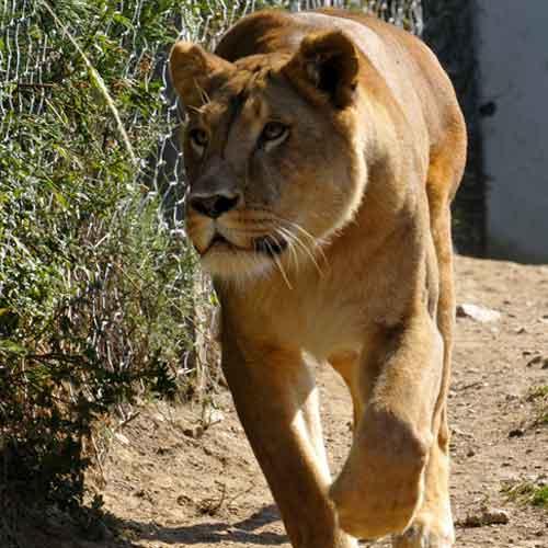 Fondation Brigitte Bardot cirque sans animaux
