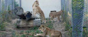 Fondation Brigitte Bardot refuge animaux cirques