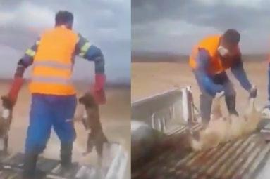 Vidéo de chiens enterrés vivants au Maroc : la FBB est scandalisée et demande au gouvernement d'interdire ces tueries !