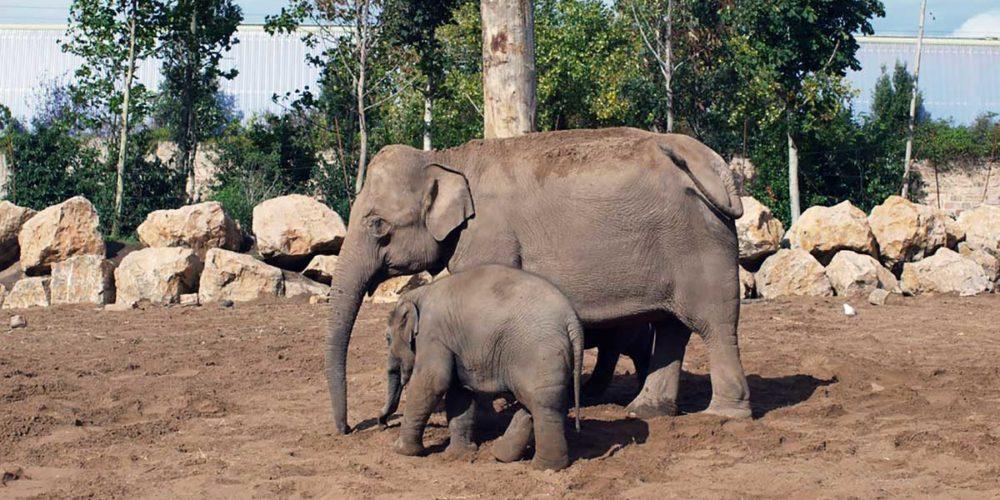 Confinement : la directrice d'un zoo allemand menace de tuer certains animaux pour en nourrir d'autres