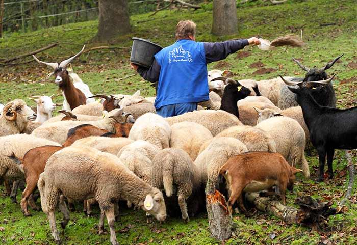 Fondation Brigitte Bardot refuges pensions structures partenaires animaux de ferme chèvres ovins sauvetages