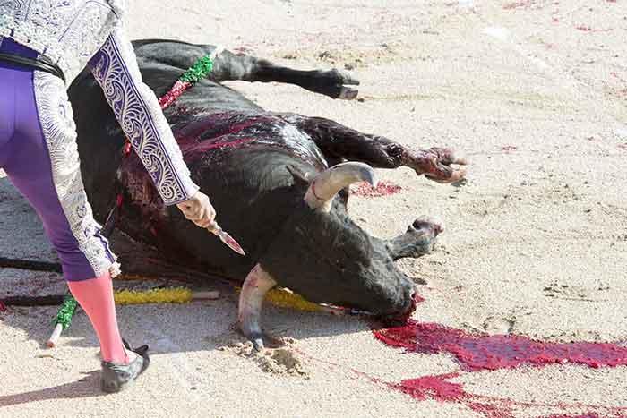 fondation brigitte bardot annulation corridas taureaux abattoir corrida