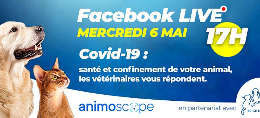 Ne manquez pas le Facebook Live d'Animoscope ce soir à 17h, en partenariat avec la FBB !
