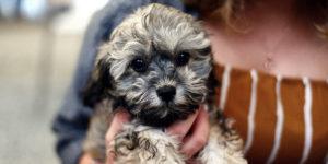 fondation brigitte bardot information rapatriement animaux de compagnie etranger