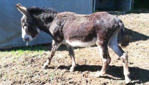 fondation brigitte bardot sauvetage equides anes poneys drome