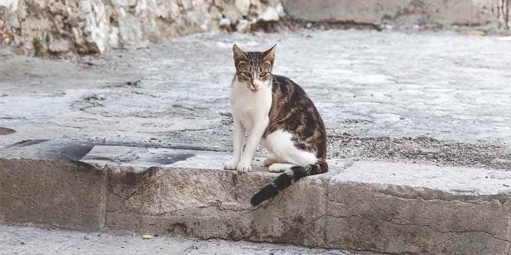 Lettre ouverte de Brigitte Bardot à Didier Guillaume sur la stérilisation des chats errants en France