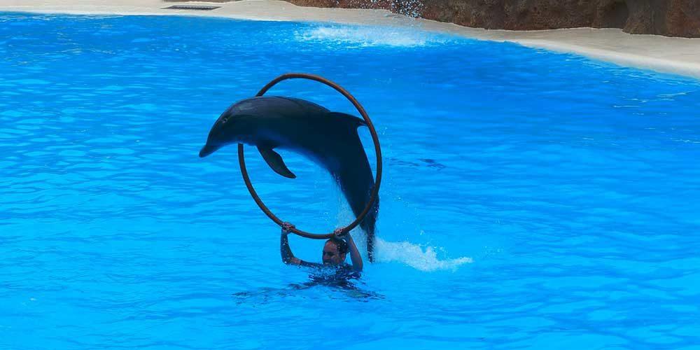 Mauvaise nouvelle pour les associations de protection animale : Marineland vient d'annoncer la naissance d'un delphineau…