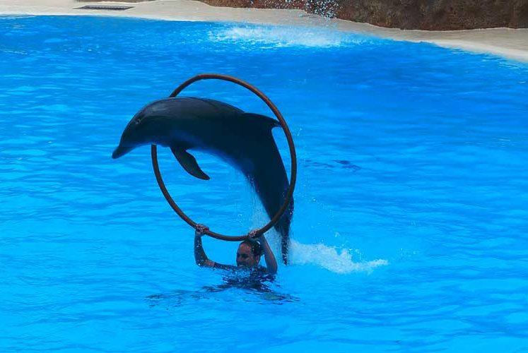 Fondation Brigitte Bardot delphinarium