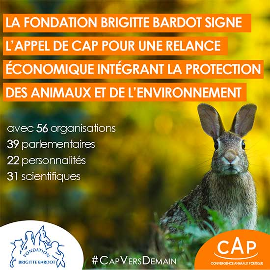 fondation brigitte bardot tribune journal du dimanche cap plan relance economie protection animale