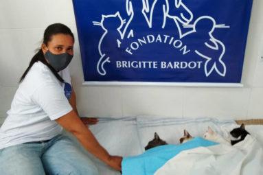 Au Brésil, en 2019, la FBB a aidé Projeto Cãogatunodes à stériliser plus de 400 animaux avec World Vets