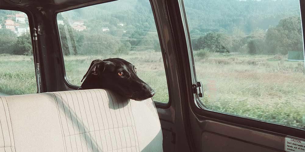 En moins d'une heure, votre animal peut mourir dans une voiture en plein soleil !